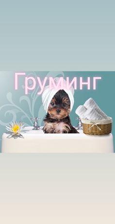 Борщаговка Груминг Стрижка собак