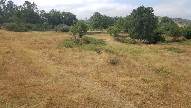 Terreno junto a ribeiro - Abrunhosa A Velha