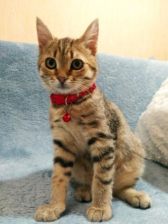 Отдам даром котенок девочка