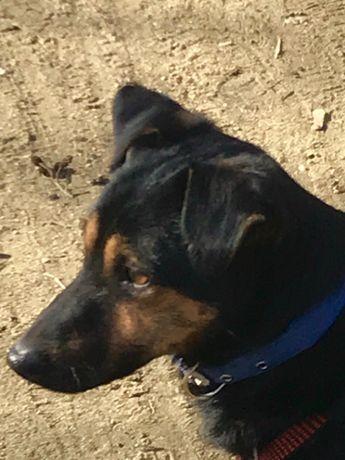 ŻELEK-śliczny psiak do adopcji