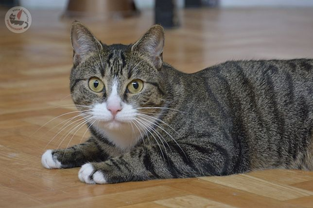 Pixi- cudowna kotka