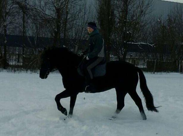 Уроки верховой езды, прогулки по лесу на лошадях