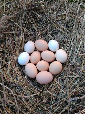 Jaja jajka wiejskie od kur z wolnego wybiegu