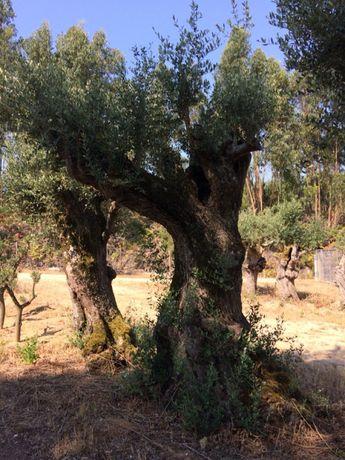 Oliveiras , terra para jardins e areia para valas... Vários preços