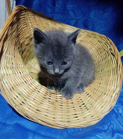 Котенок 1,5 месяца.