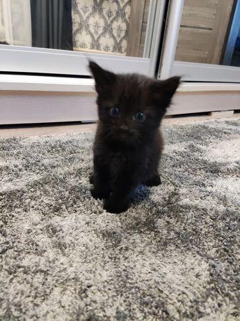 Отдам даром котят  кот мальчики белый черный