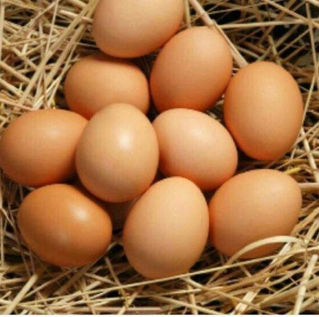 Яйца куриные большие домашние.