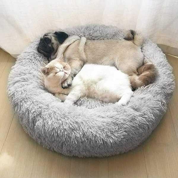 NOVAS - Cama Anti-Stress para cão e gato