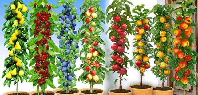 Саженцы плодовых деревьев яблок груш