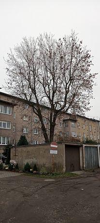 Drzewo do wycięcia i wywóz