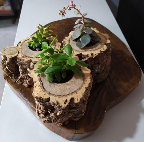 Vasos madeira suculentas