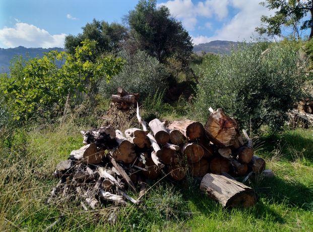 Damos Lenha eucalipto/pinheiro