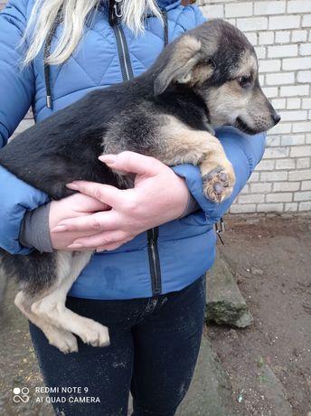 Щенок мальчик собака в добрые руки бесплатно