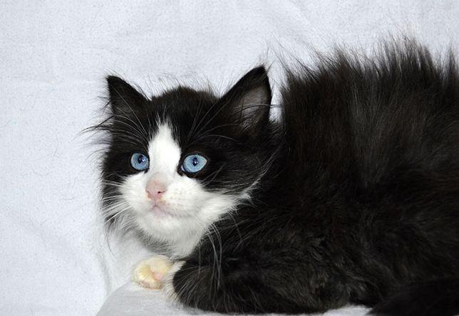 черный мальчик с голубыми глазами