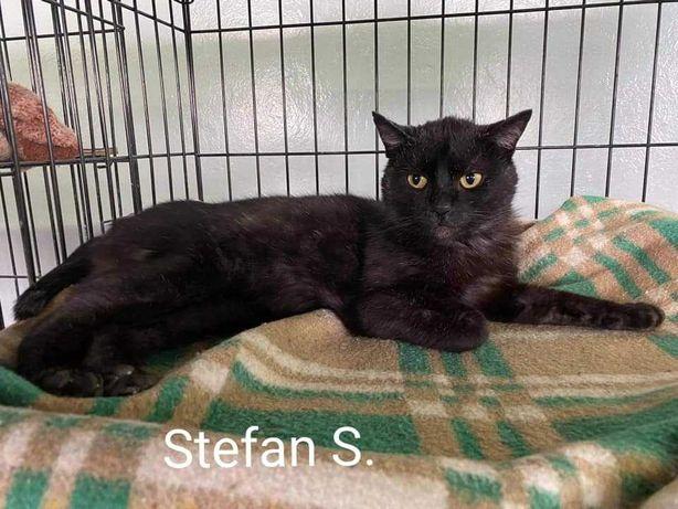 Stefan szuka domu jako koci jedynak