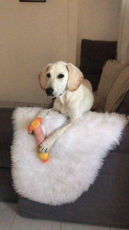Adoção responsável: Procura-se familias para Cão meigo e brincalhão
