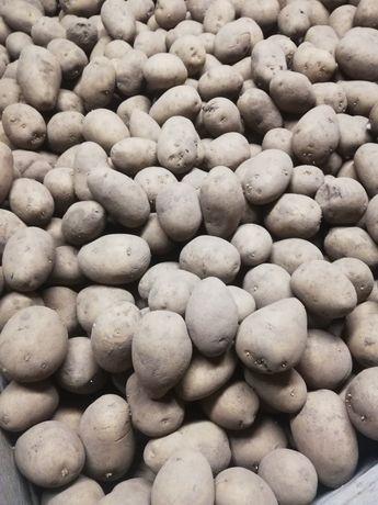 Sprzedam ziemniaki 40-45