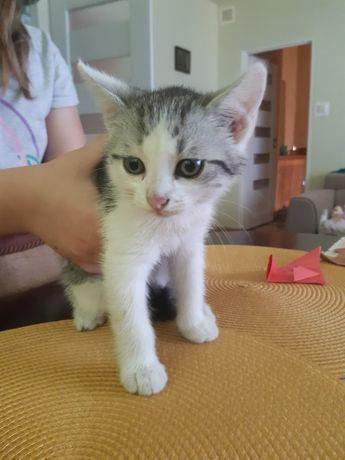 Oddam kota i kociczke