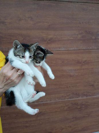 Kotki czarno białe