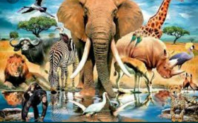 Услуга, животные, передержка животных дома