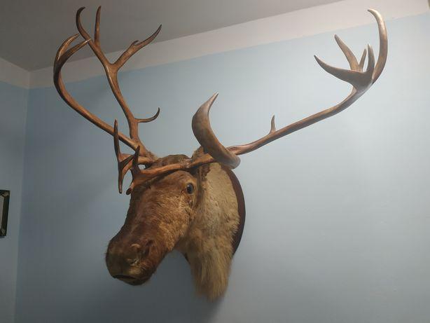 Голова оленя з рогами