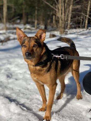 Poligon - z początku niepewny, ale cudowny pies