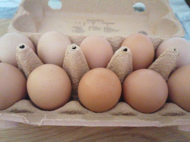 Sprzedam swojskie jajka