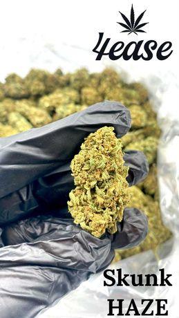 Susz CBD Skunk Haze 1 kg Sprawdź ofertę!