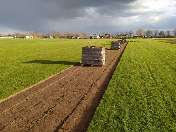 Trawa z rolki/trawnik z rolki