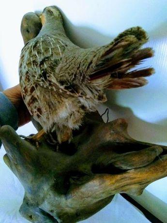Птица куропатка на ветке с креплением на стену
