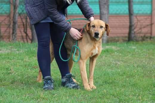 Bezimienny pies szuka domu