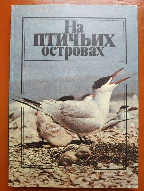 На птичьих островах, 1989 год