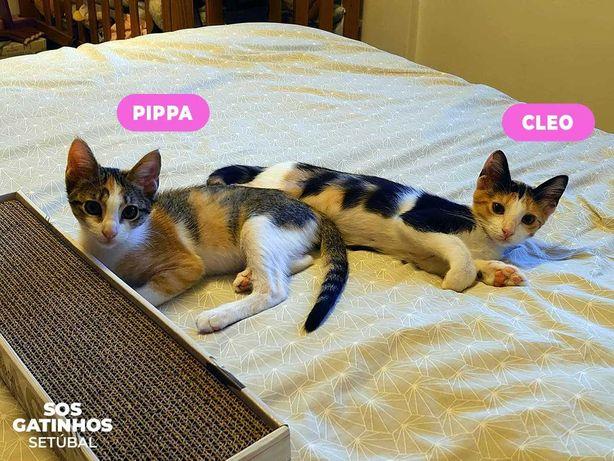 SETÚBAL / LISBOA e arredores -- PIPPA e CLEO, gatinhas para adopção