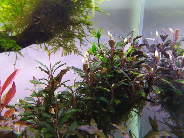 Plantas de aquário