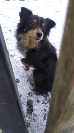 Znaleziono psa w Trzęsaczu! Drobny, czarny kundelek / Kozielec