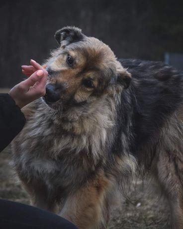 Piękny, starszy Teo do adoptowania!Słuchany psiak,czego chcieć więcej?