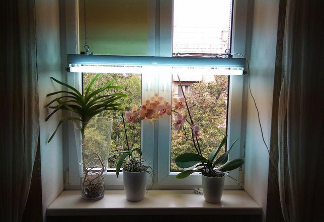 Фитолампа, подсветка для растений. Светильник с лампами.