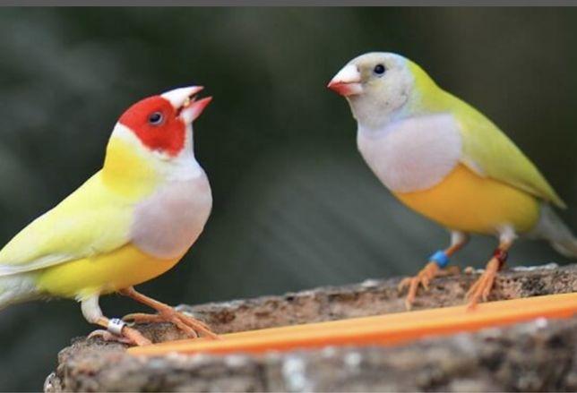 Vendo aves exoticas