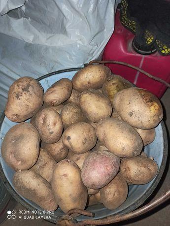 Картофель домашний, картошка вкусная