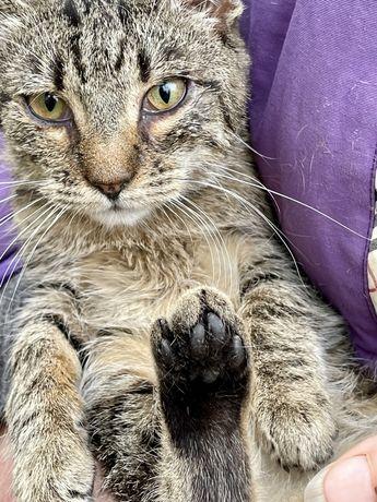 Котеня, котенок, кішка