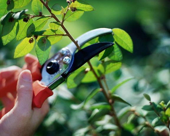 Услуги садовника-озеленителя
