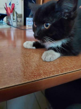 Kotka czarnobiała