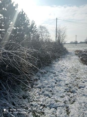Gałęzie drzew owocowych w Borzęcinie + 50zł na paliwo