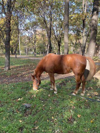 Продается Лошадь