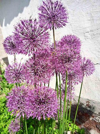 Цветы из моего сада