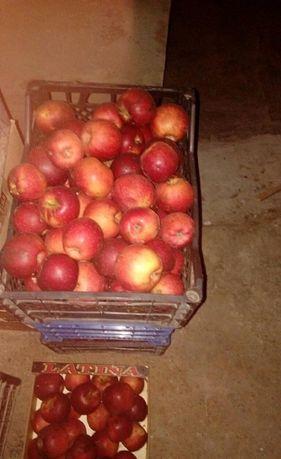 яблука сорт Флоріна, Чемпіон, Гала, Богемія -органічні без хім обробок