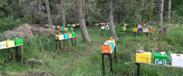Закарпаття!Карніка з інститута Маін- Німеччина,розплідник. Бджоломатки