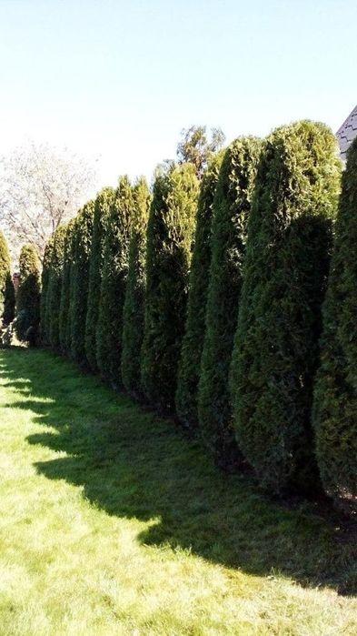 Ландшафтный дизайн, озеленение, благоустройство, газон, автополив Вишенки - изображение 1