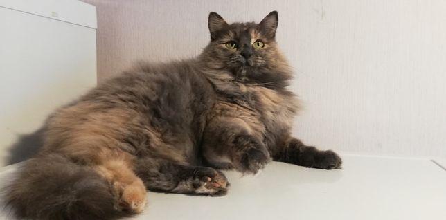 Пухнаста кішечка шукає дім!