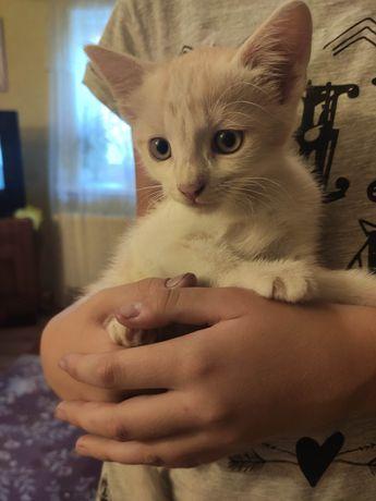 Миле кошеня Персик